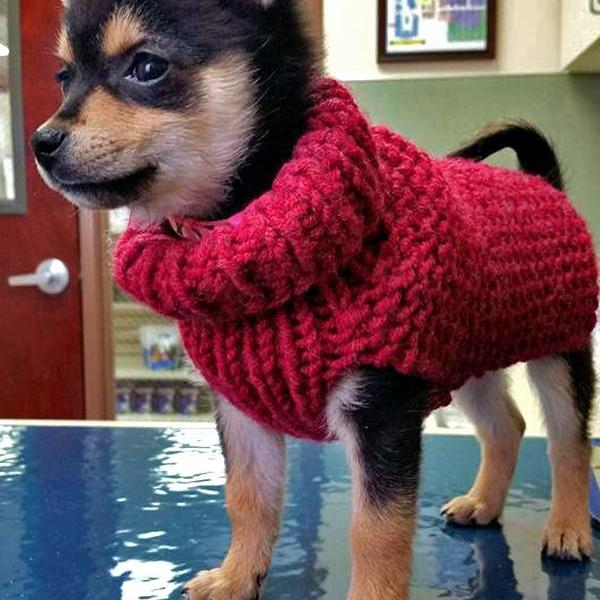 Warm Puppy Sweater Knitting Pattern